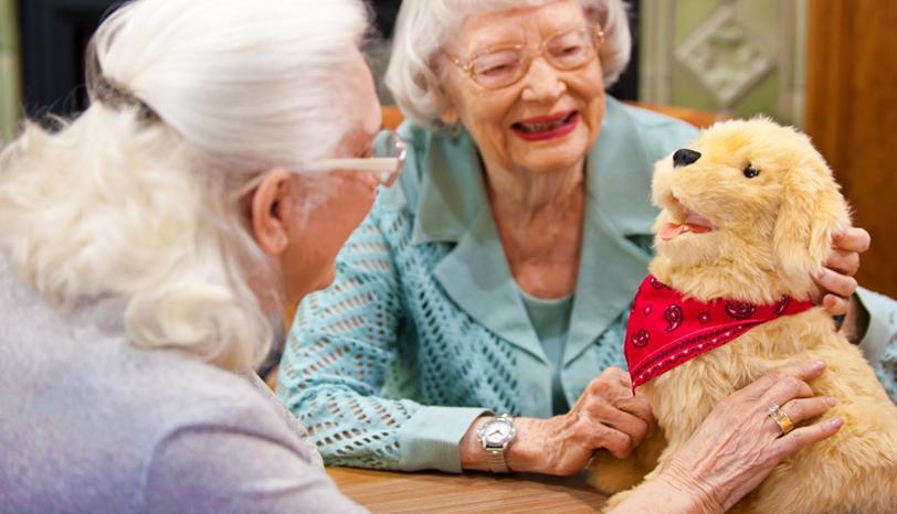 собака для пожилого