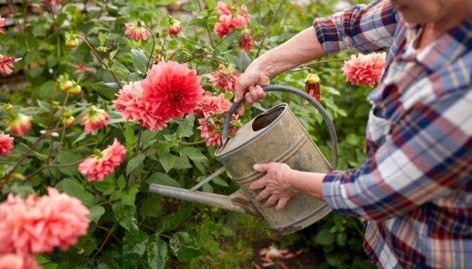 поливка цветов